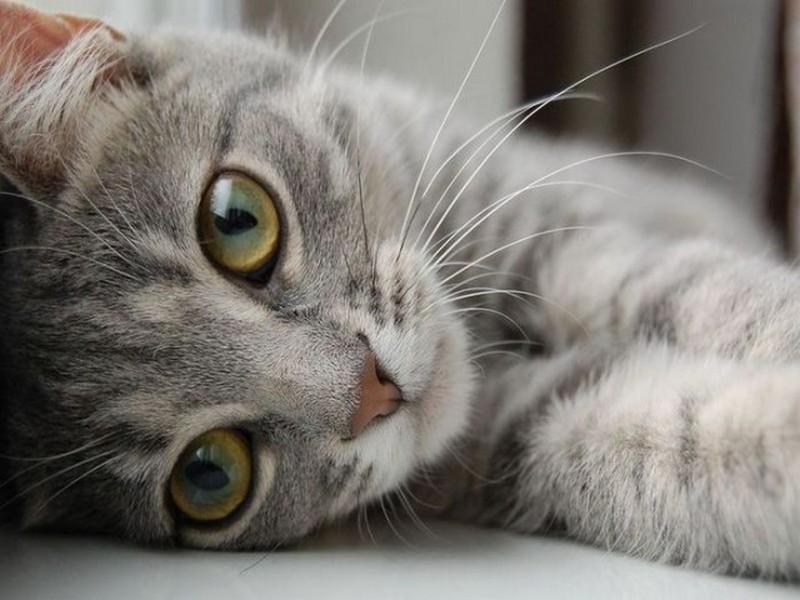 Кошачий конкурс красоты