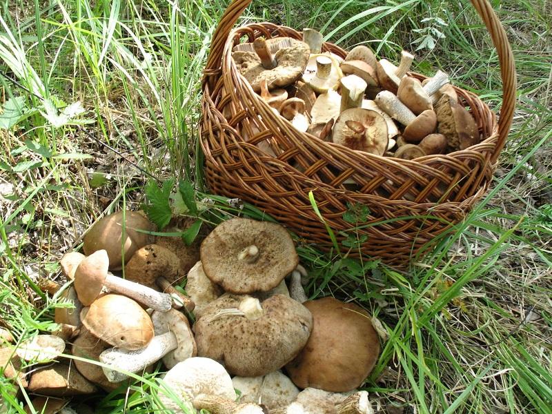 Николаевщина: первые отравившиеся в этом сезоне грибами уже выписались из больницы