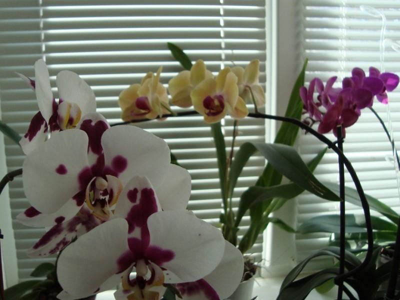Пересадка орхидей – ничего сложного