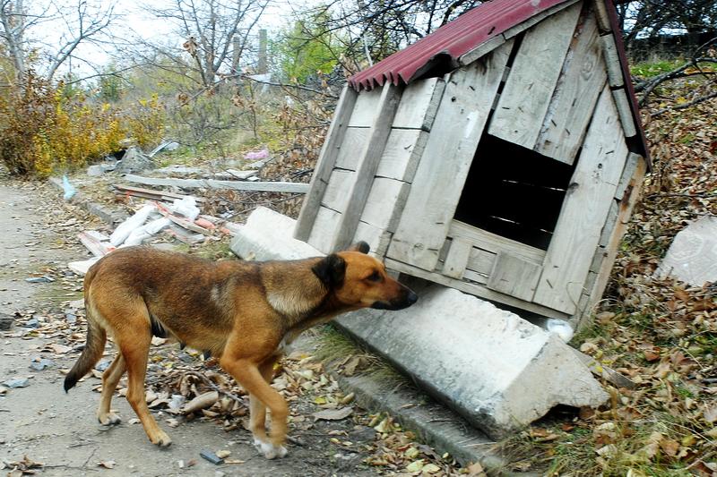 К концу года в Николаеве должен заработать Центр стерилизации бездомных животных