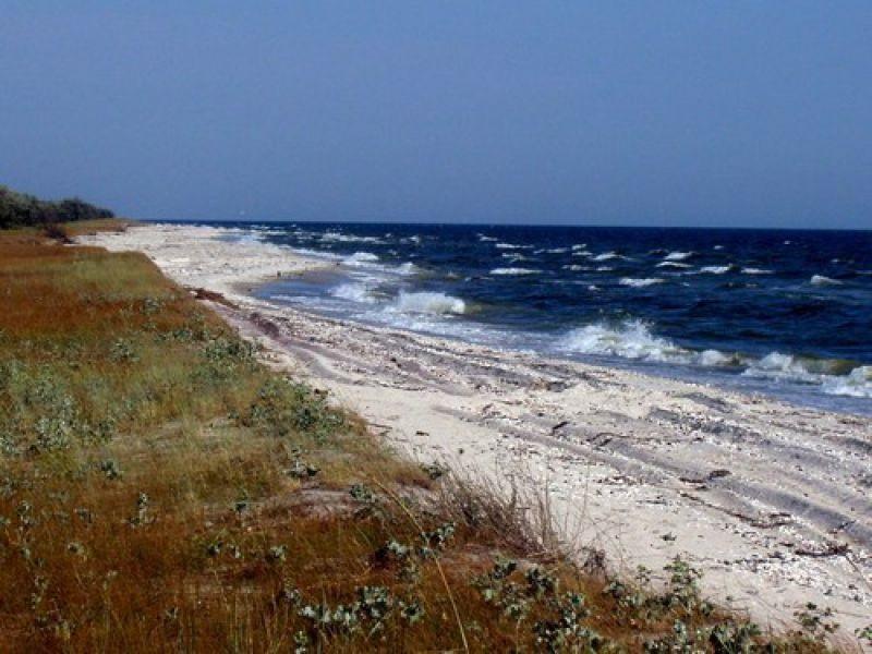 Кинбурнскую косу могут включить в сеть природоохранных территорий Европы