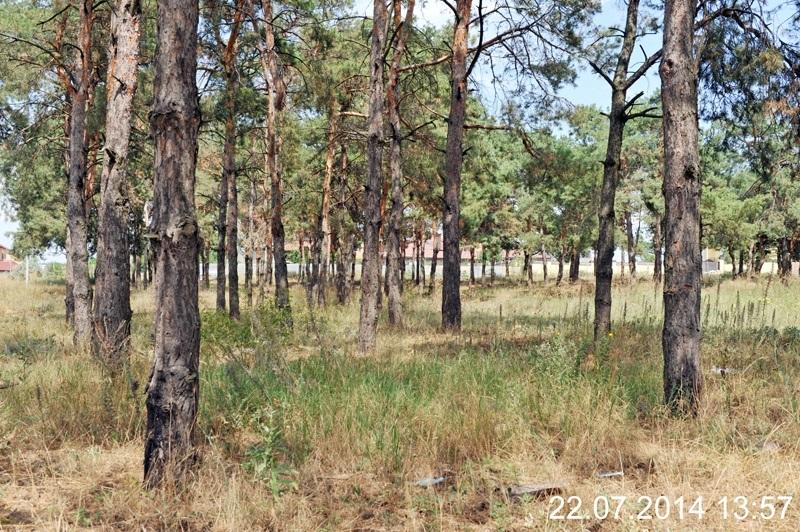 За прошлый год на Николаевщине «прирастили» 254 га леса