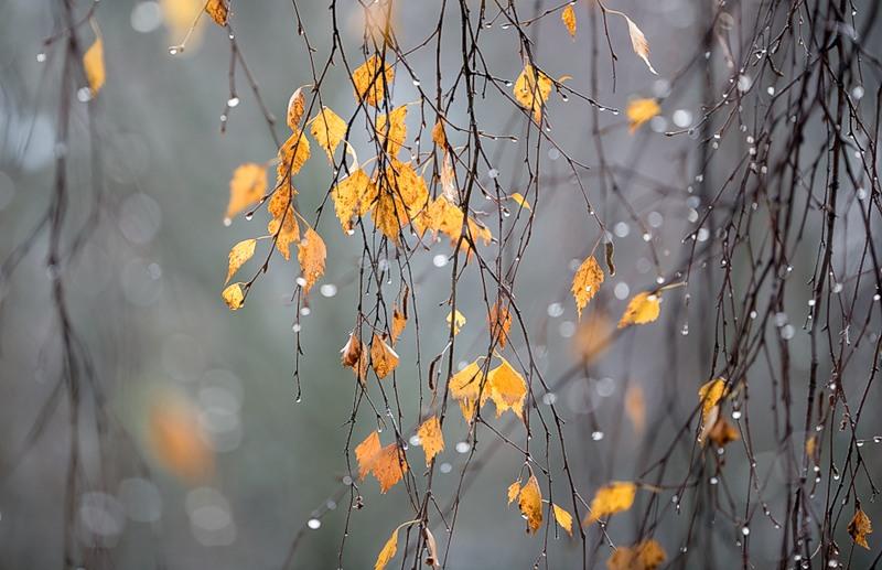 Прогноз погоды на 28 ноября