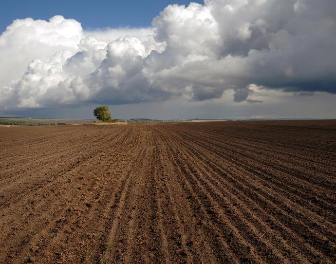 Прокуратура Николаевщины потребовала вернуть государству 320 гектаров земли за неуплату