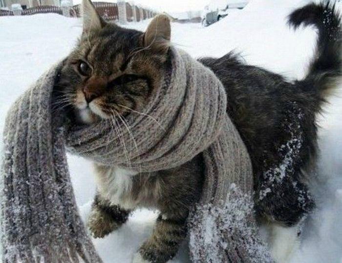 В Украину идет похолодание, ночью до -20. В Николаеве до -9