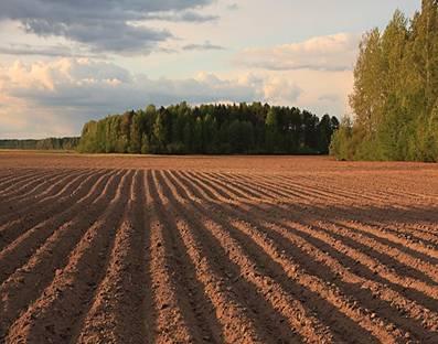 Прокуратура Николаевщины вернула 39 гектаров земли, которую арендаторы использовали не по назначению
