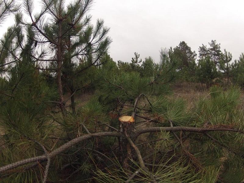 В Украине будут действовать рейдовые бригады защитников елок
