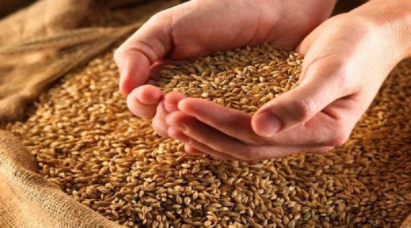 В рамках операции «Урожай» налоговики проверили свыше 2,5 тысяч сельхозпроизводителей Николаевщины
