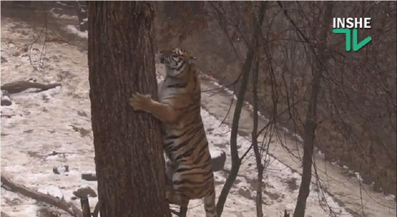 Зима в Николаевском зоопарке