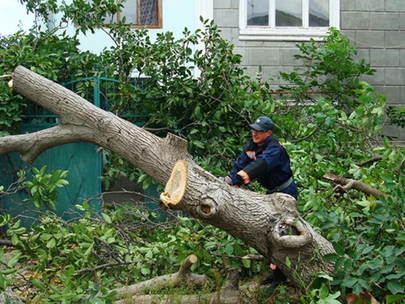 В Николаеве займутся проблемой озеленения и ветхих деревьев