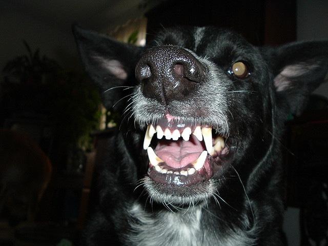 В Николаеве на 3-летнюю девочку напали собаки. Девочка в реанимации