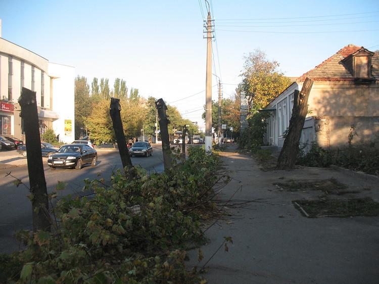 Обрезание по правилам: «Николаевобленерго» не будут больше варварски кромсать деревья