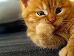 В Первомайске дама решила купить котенка за 2 тыс.грн. по Интернету. И денег нет, и «мяу» только в сети