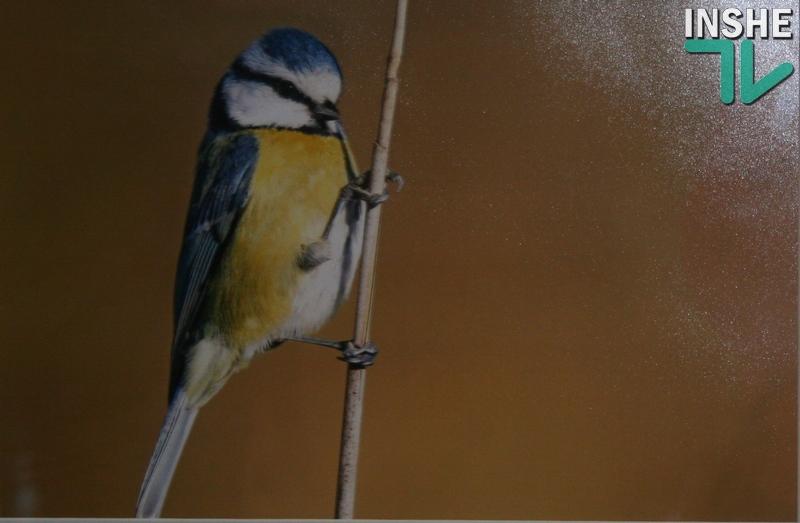 «Бандеровские» птички – не только синички, дятлы тоже – сало любят… В Николаеве открылась уникальная фотовыставка
