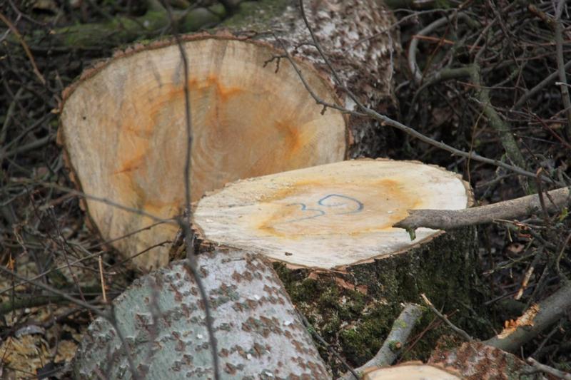 В Национальном природном парке «Бугский Гард» вырубили 1200 деревьев и 416 кустарников и сняли плодородный слой почвы