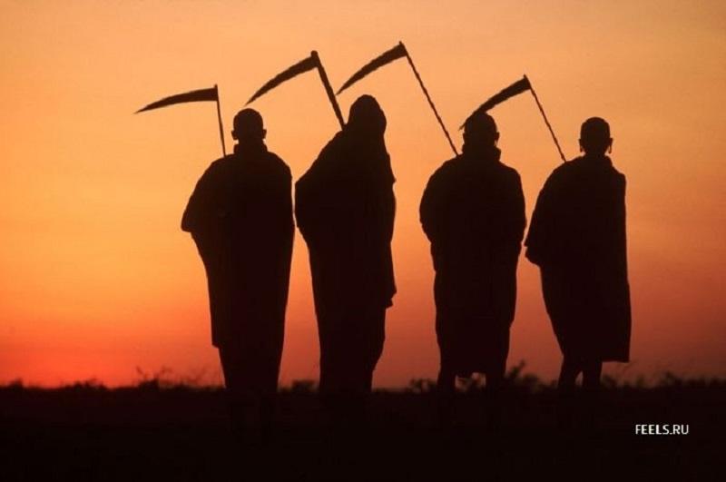 Не Ясь, и не конюшину: в Доманевке глава РГА и начальник райотдела организовали сбор 111 тонн чужой озимой пшеницы