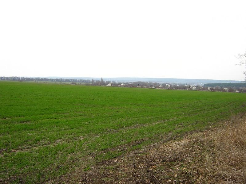Посевная на Николаевщине: яровые зерновые посеяны на 76% площадей, озимые хорошо себя чувствуют на 97% площадей