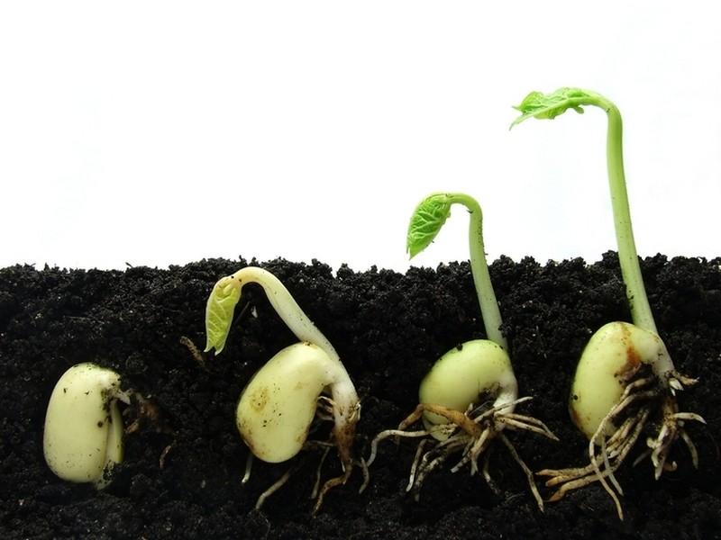ЕС открывает импорт семян из Украины