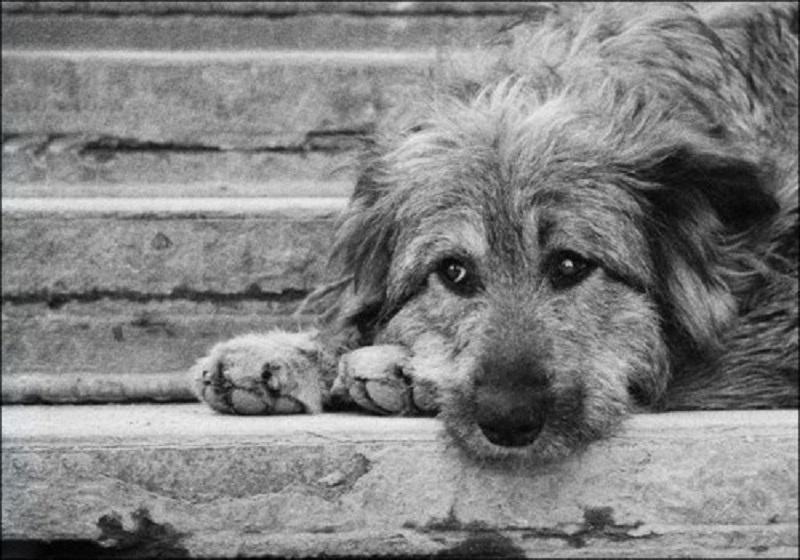 На этой неделе в Корабельном районе будут отлавливать бездомных животных