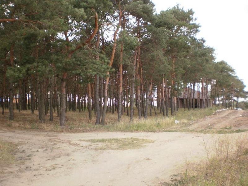 Почти юбилей: вот уже 10-й участок леса у маяка в Корабельном районе отсужены у «прихватизаторов»