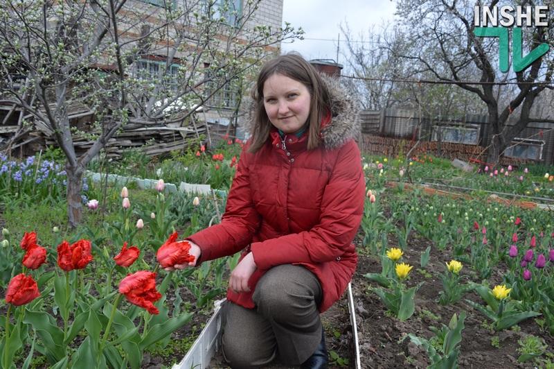 В Николаеве есть своя маленькая Голландия: «Тюльпанная радуга» Инны Токаревой