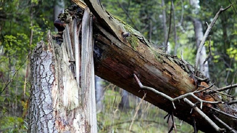 Упало 270 деревьев, убрано пока 106: Николаев приходит в себя после буйства стихии