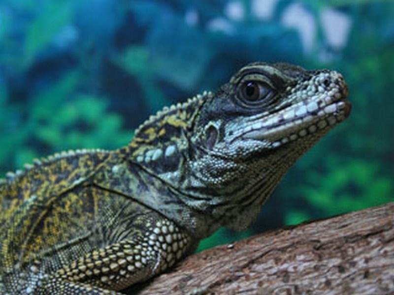 Гады ползучие очень красивы: зооцентр «Афалина» передал Николаевскому зоопарку свою коллекцию рептилий