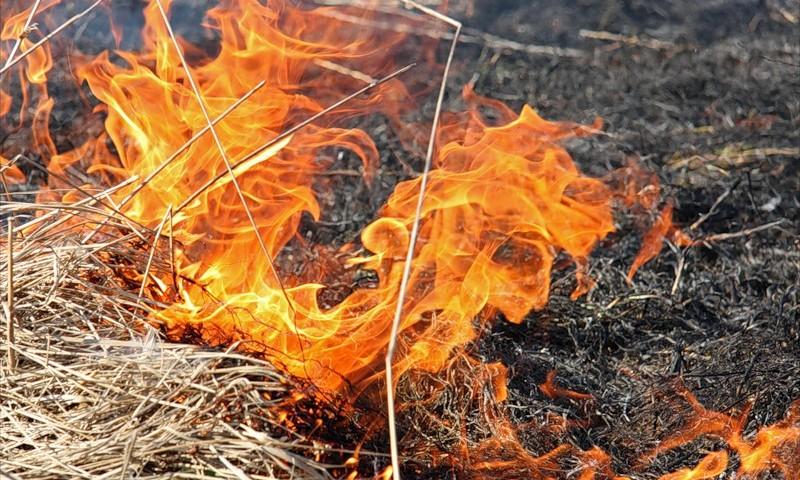 На Николаевщине за сутки 20 пожаров в экосистемах: горели не только открытые территории, а и лес 5