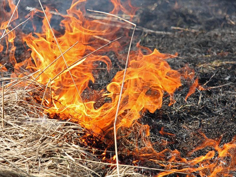 В Первомайском районе пожарные потушили пожар сухой травы