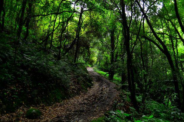 Украина будет сотрудничать с Австрией в вопросе защиты лесов