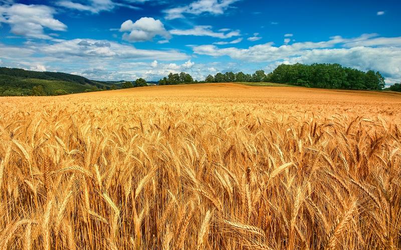 На Николаевщине сельхозпредприятие задолжало государству 600 тыс. грн.