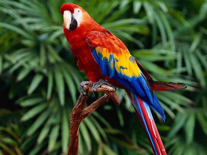 Попугаи умеют изготавливать три различных вида столовых приборов (ВИДЕО)