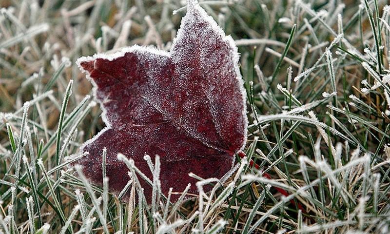 В Украине ожидаются ночные заморозки до -5 °С 3