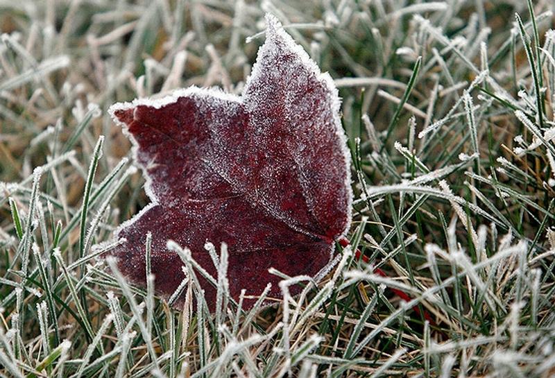 Синоптики прогнозируют заморозки на выходных