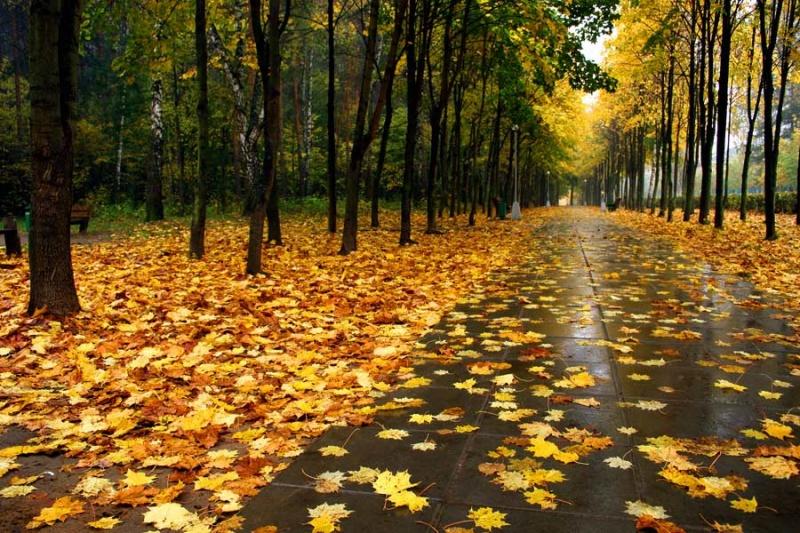 Завтра в Украине без осадков, температура до +9