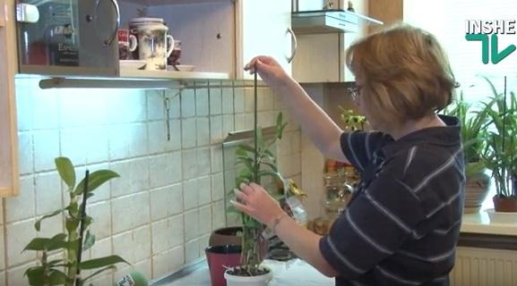 """Размножаем орхидеи """"детками"""""""
