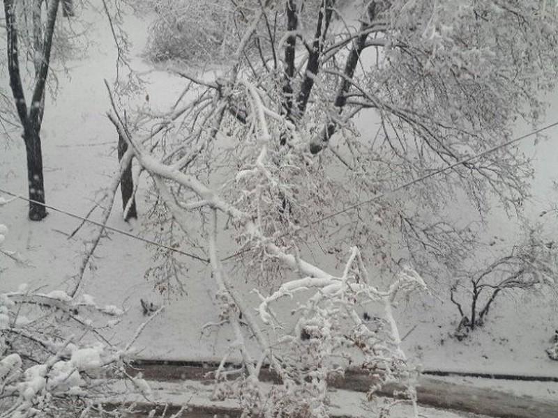 Последствия сильного снегопада в Харькове: упало боле 500 деревьев, есть перебои с электричеством