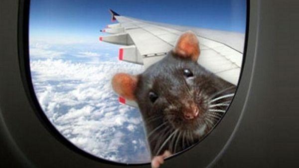 Крыса на борту. Самолёт из Мумбаи не долетел до Лондона