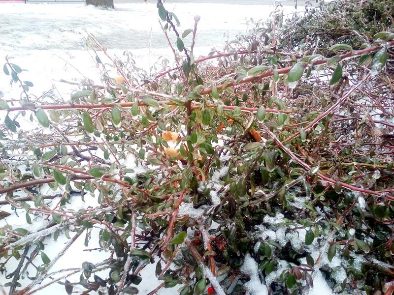 Держитесь за воздух: в Николаеве – ледяной дождь