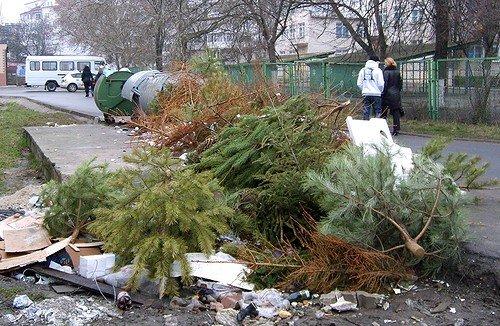 """Проект """"новогодняя елка"""": в ГЭИ рассказали, как будут контролировать продажу деревьев"""