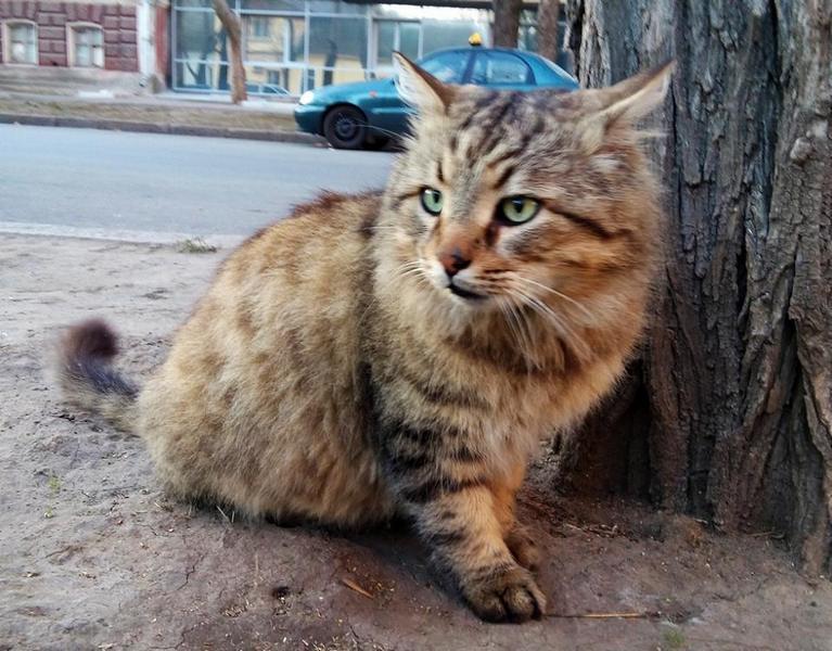 В Киеве мужчина получил 6 месяцев тюрьмы за жестокое избиение кота