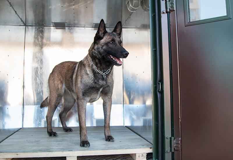 Нацгвардия купила спецавтомобиль для служебных собак
