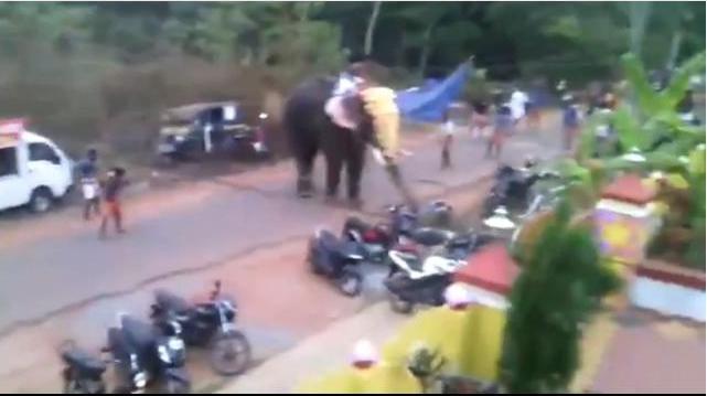 В Индии взбунтовавшийся слон растоптал мотоциклы, велосипеды и машины