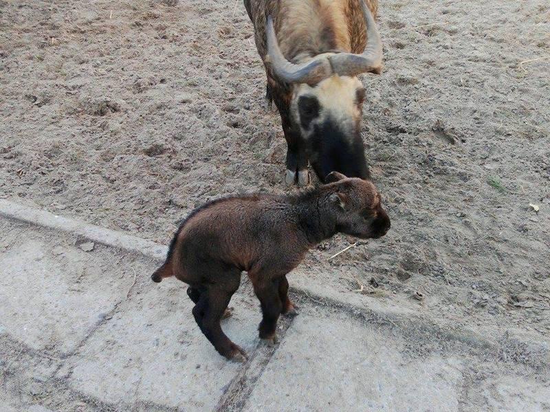 Бэби-бум в Николаевском зоопарке продолжается: здесь теперь знают, какими бывают такинята