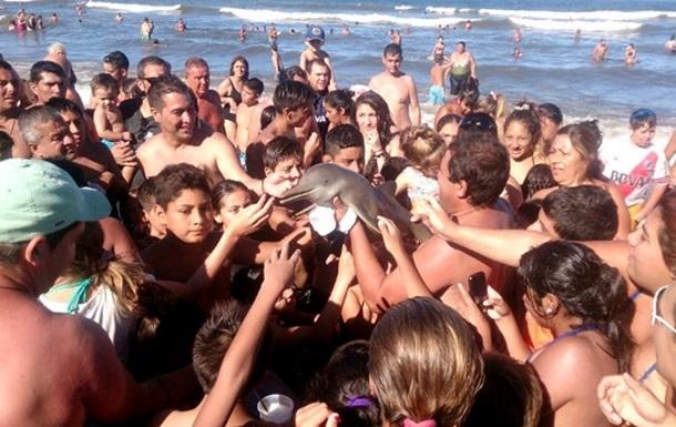 """В Аргентине туристы """"заселфили"""" дельфиненка досмерти"""