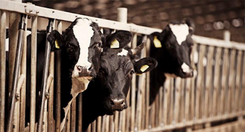За месяц в Украине больше всего подорожали овощи и молочные продукты