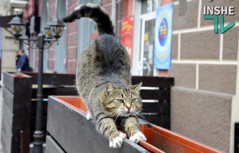 Инженер создал нейросеть, которая отгоняет котов поливалкой