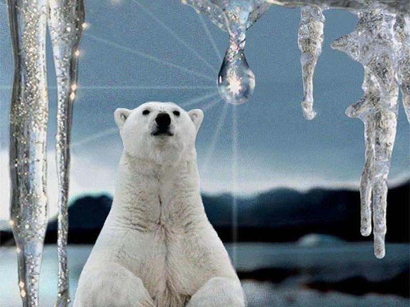 Экологи заявили, что Северное море нагревается вдвое быстрее мирового океана
