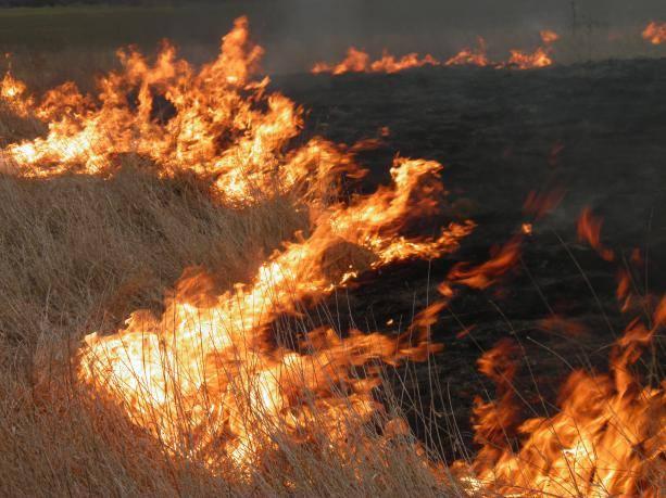 За сутки на Николаевщине выгорело более 16 га открытых территорий