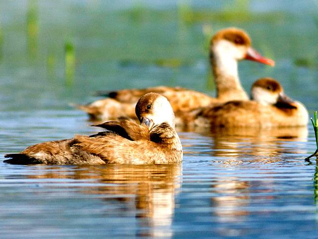 Еще в одном селе Николаевской области обнаружен птичий грипп